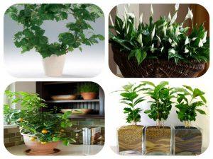 نباتات ظل لتنقية الهواء داخل المنزل