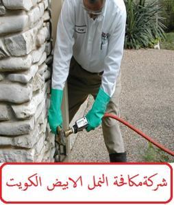 شركة مكافحة النمل الابيض الكويت
